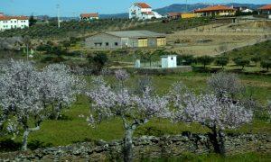 Visita às Amendoeiras em Flor (Alto Douro) – 2015-03-05